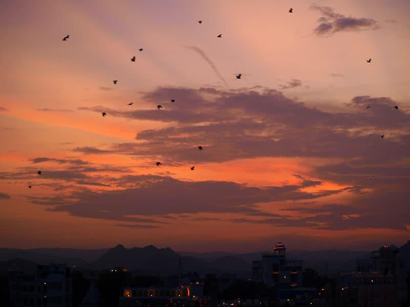Flagermus i Udaipur