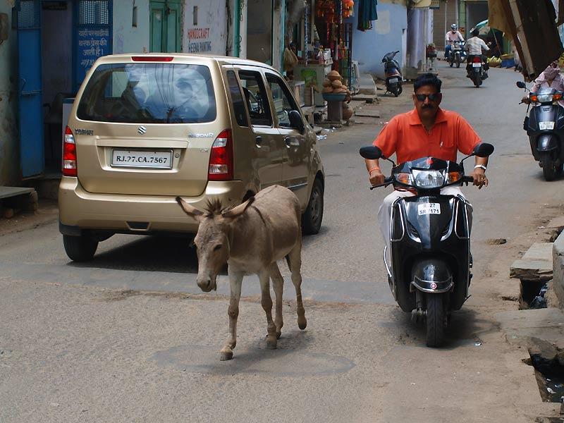 Scooter og æsel i Udaipur