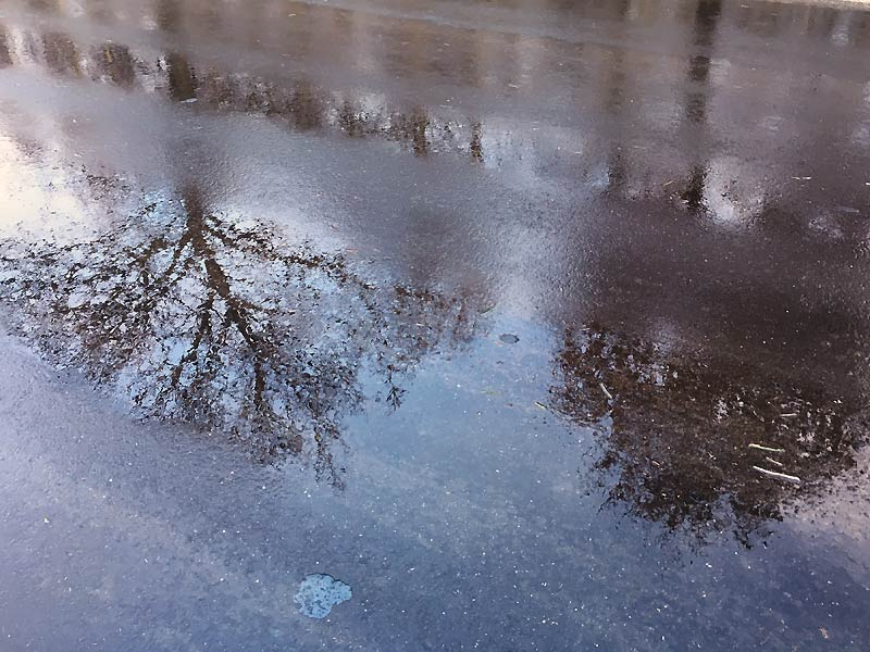 Træer spejler sig i den våde asfalt på en dag med gråvejr i januar