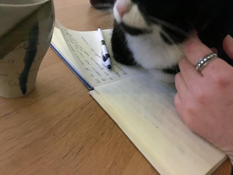 Te og spindende kat på en dag med gråvejr i januar