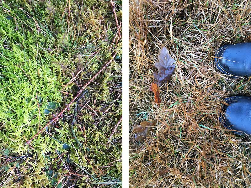 Blade og mos i skoven på en dag med gråvejr i januar
