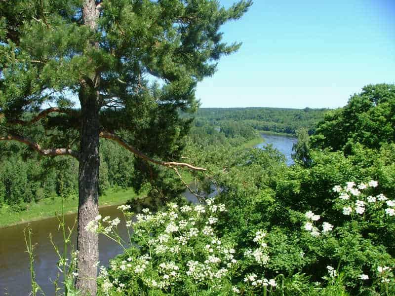 Skov og flod i Litauen i Østeuropa