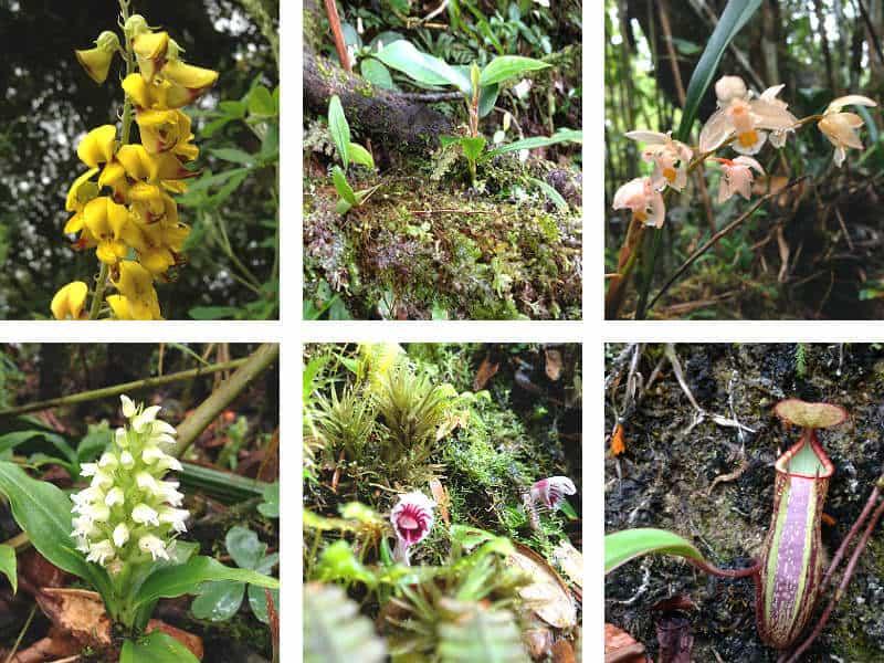 Blomster i mosskoven i Cameron Highlands