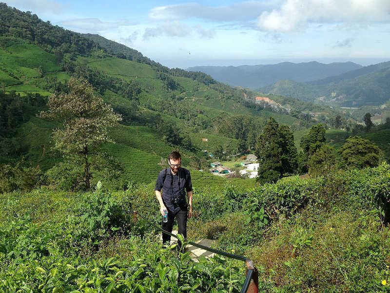 Kenneth på vandring i teplantage i Cameron Highlands i Malaysia