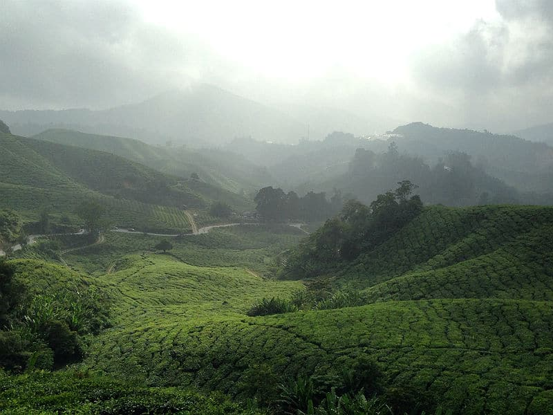 Udsigt over temarker i Cameron Highlands i Malaysia