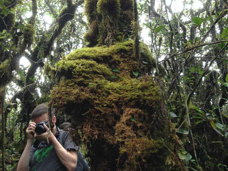 Kenneth i mosskoven i Cameron Highlands i Malaysia