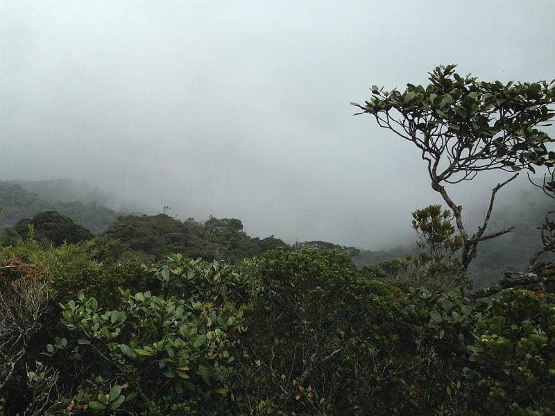 Tågeskoven i Cameron Highlands