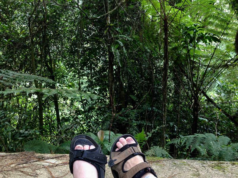 Fodbillede fra skoven ved Tanah Rata i Cameron Highlands i Malaysia