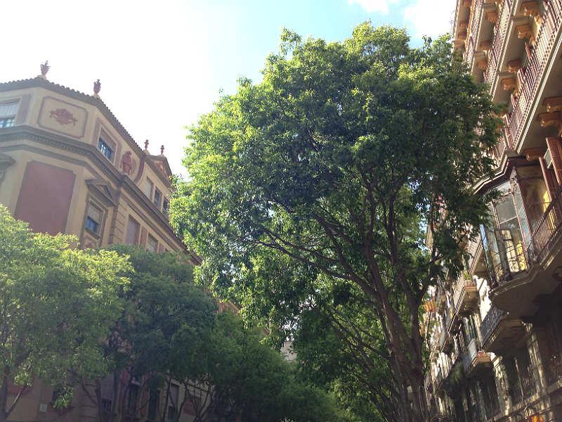 Smukke træer og bygninger i Barcelona