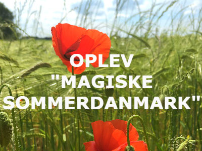 Røde valmuer ved grøn mark i Danmark