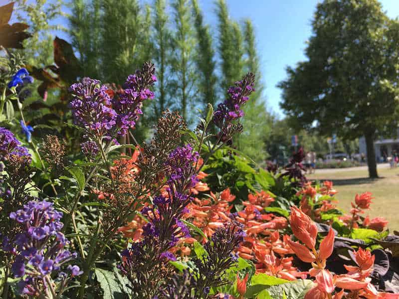 Se byens liv og blomster, når du er på weekendtur i Gøteborg