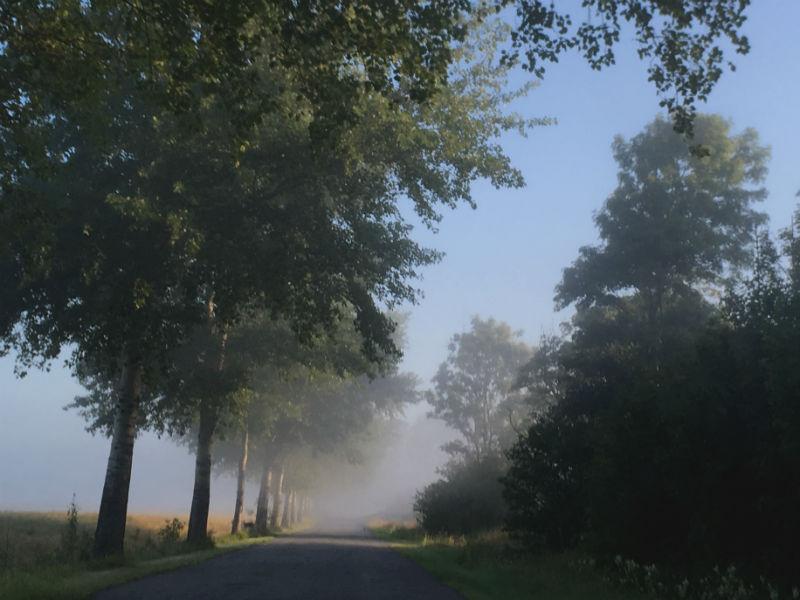 En diset morgen i Sommerdanmark - Live from Denmark
