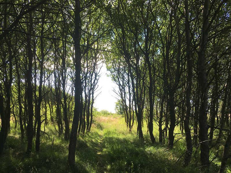 Skov og dejlig dansk natur - Live from Denmark