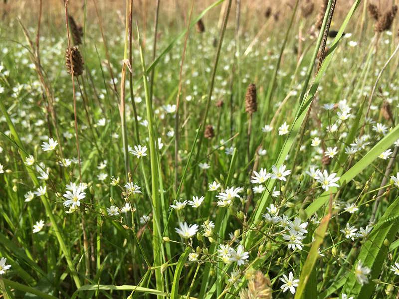 vilde blomster i den danske natur - Live from Denmark