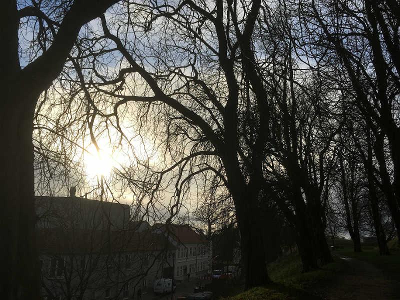 Solen bryder igennem på Volden i Fredericia