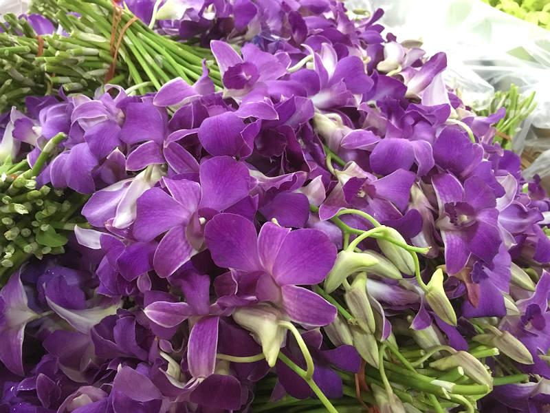 Orkidéer på blomstermarked i Bangkok