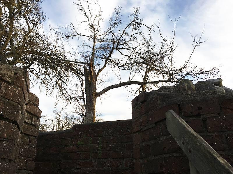 Træ ved Gurre Slot nær Helsingør