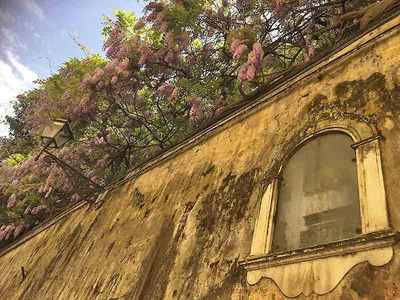 Syrener i Firenze