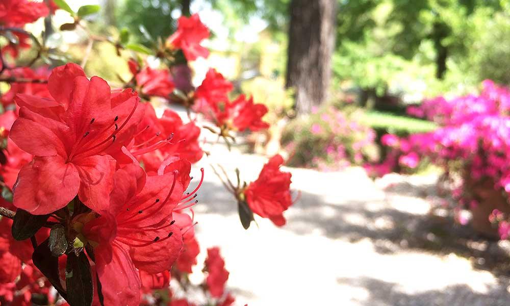 Blomster i park i Firenze