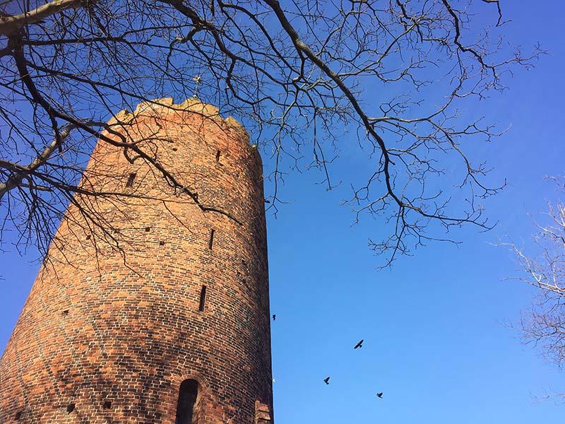 Alliker ved Gåsetårnet i Vordingborg