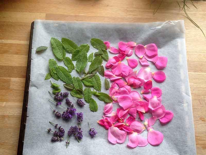 tørring af urter i mit køkken