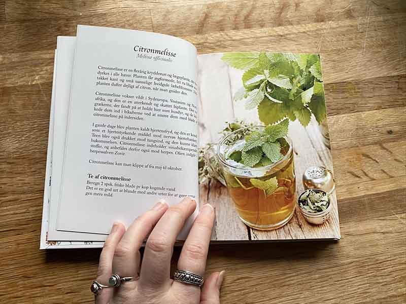 Om citronmelise i bogen urtete fra natur og have