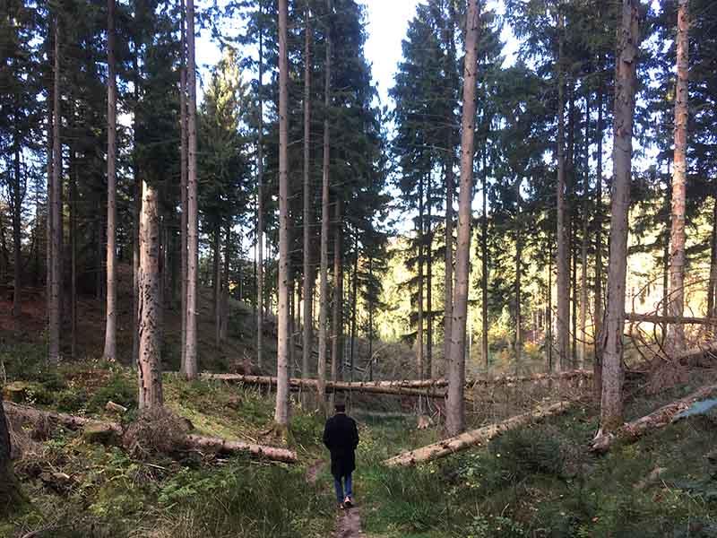 Kenneth Karl Nielsen i skoven på vej ned fra Frederik den 7's Høj nær Silkeborg