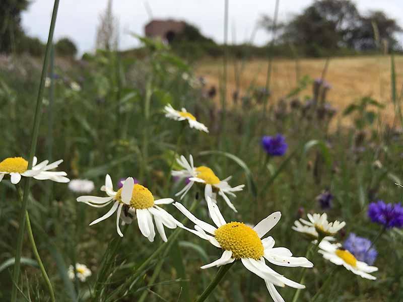 blomster ved Møllehøj